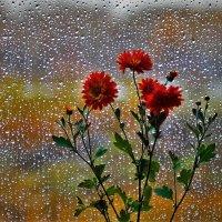 Плачет дождик за окном :: Сергей Чиняев