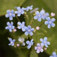 Flower_82 :: Trage
