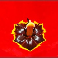 В сердце тюльпана :: Лидия (naum.lidiya)