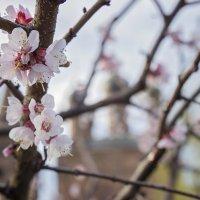 Весна :: Sheri Day