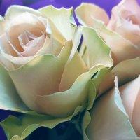 Розы  к годовщине :: Ирина