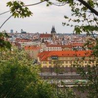 Вид с Летенских Садов на Прагу :: Алексей Морозов