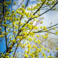 Краски весны :: Игорь Герман