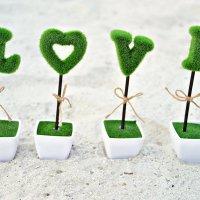 декоративные деревца :: Карина Заика