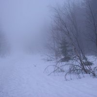 туман :: Анастасия Иноземцева