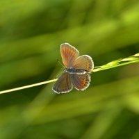 Бабочка :: Алексей Могилёв