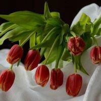 Весна - это время любви и надежд, тюльпанов... :: Ольга Русанова (olg-rusanowa2010)