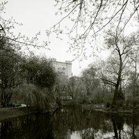 Весна ... :: Лариса Корженевская