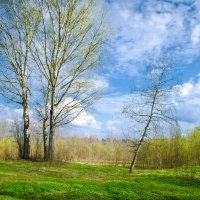 Весна на северо-западе :: Владимир Рязанов