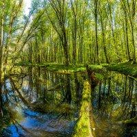 Пруд в весеннем лесу на Стрижаменте. :: Фёдор. Лашков