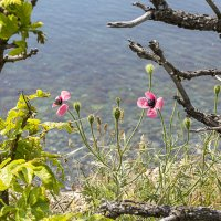 Весна на Большом Утрише :: Елена Васильева