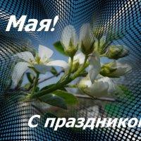 С праздником 1 Мая! :: Наталья (Nata-Cygan) Цыганова