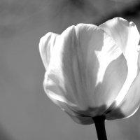 черно-белая весна :: Irina