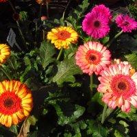 Цветы этого года :: Андрей Лукьянов