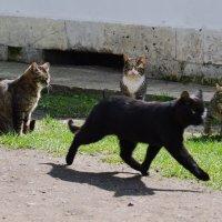 """""""А кошка отчасти идет по дороге, Отчасти по воздуху плавно летит."""" :: Lena Loft"""