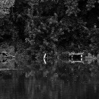 Рыбные  места... :: Валерия  Полещикова