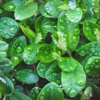 После дождя :: Маргарита Б.