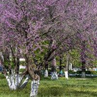 На улицах царит весна :: Игорь Сикорский
