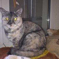Сидит кошка на окошке. :: Лена