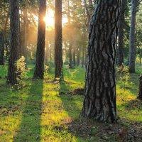 Уже не гостьей солнышко в лесу... :: Лесо-Вед (Баранов)