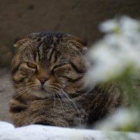 Не сплю, я просто медленно моргаю... :: Роман Демчук