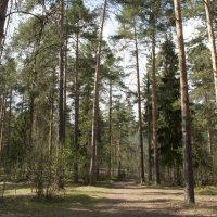 Наш парк :: Павел Серов