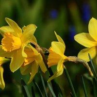 Жёлтого мая цветы :: Paparazzi