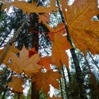 Осенний лес :: Ihva