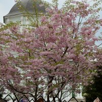 Весна в Царицыно :: Любовь Зима