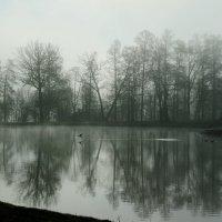 Утро на озере :: НикЛеод