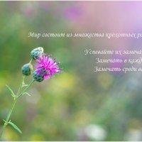 Сегодняшнее настроение ) :: Райская птица Бородина