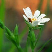 и в цветах водятся таракашки :: Алиса Терновая