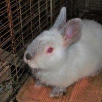 Крольчонок :: Николай Масляев