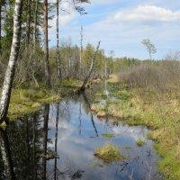 Солнечный день на болоте :: novik Юрий Новиков
