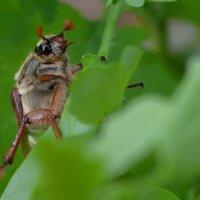 Привет жук! :: Ростислав