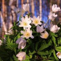 Весне салют :: Татьяна Ломтева