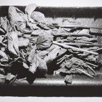 Веточки мяты в пластмассовой упаковке :: Саша Суфранс