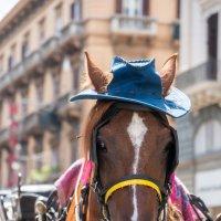 Кто, кто...? Конь без пальто! :: Ашот ASHOT Григорян GRIGORYAN