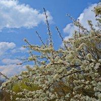 Весенний вальс... :: Galina Dzubina