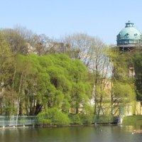 нежная майская зелень, Таврический сад :: Елена