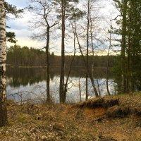 Лесное озеро. Псковщина :: Наталья