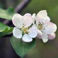 Flower_74 :: Trage