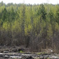 зелёный шум :: sv.kaschuk
