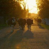 Летний вечер в деревне :: Мария Ставцева