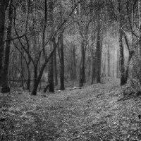 Таинственный лес :: Егор Балясов
