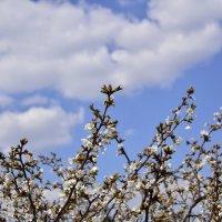 Весна в самом расцвете :: Александр Сидоров
