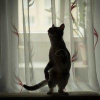 кошка :: Elena Каримова