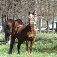 В парке лошади гуляли......... :: Наталья