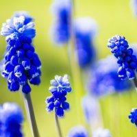 цветы :: Алексей Строганов