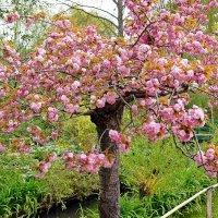 весна :: Александр Корчемный